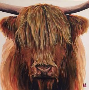 Gus - Highland bull
