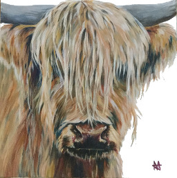 Marigold - Highland bull