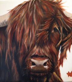 Rosie - Highland cow