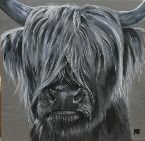 Tavish - Highland bull