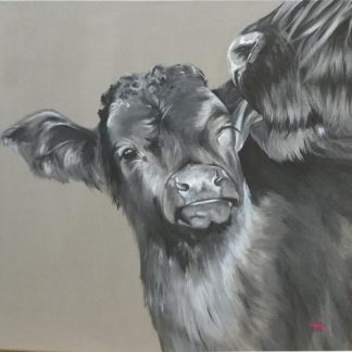 "Cow licking her calf, ""You will always be our baby"""